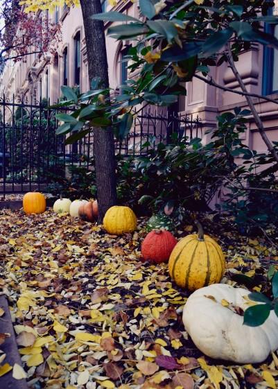 TheSecretCostumier - New York10