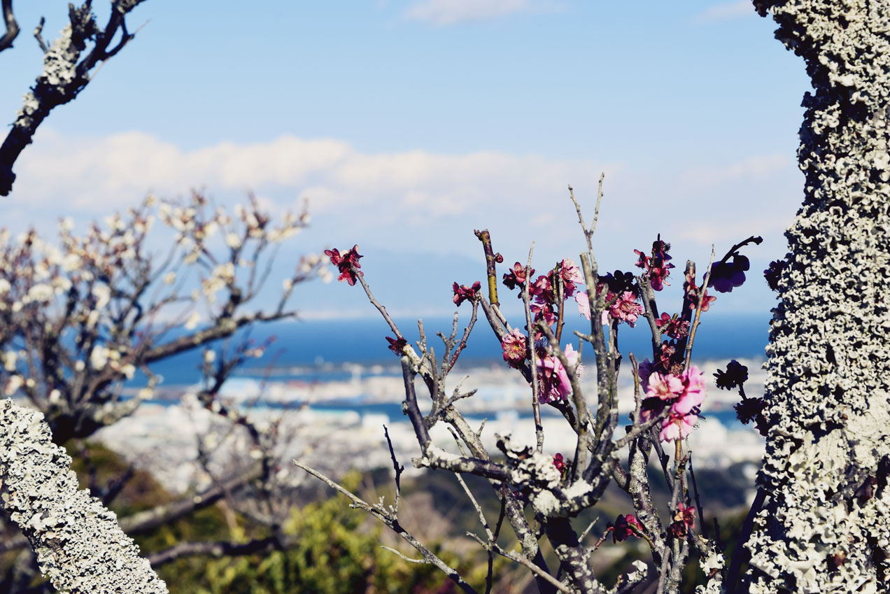 TheSecretCostumier - Mt Fuji1