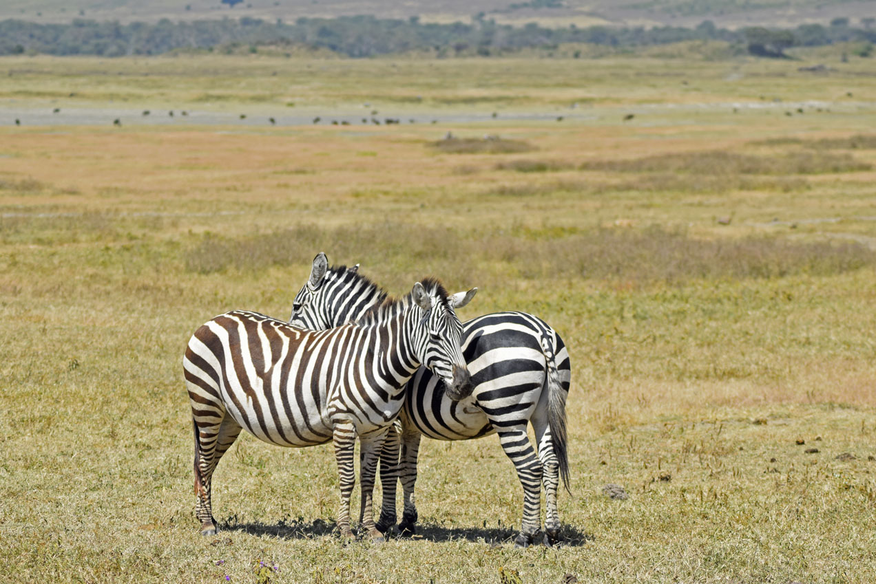 TheSecretCostumier - Tanzania - Ngorongoro Crater